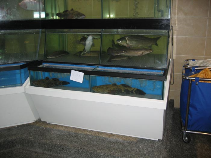 The gallery for petsmart freshwater fish for Petsmart fish sale